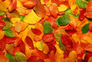 Palette colori autunno-inverno...dalla moda all'arredo!