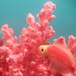 Living Coral: colore dell'anno 2019!