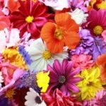 Vasi da fiori...oggetti di design che fanno primavera!