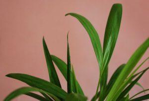 Hai voglia di dare una svolta alla tua casa puntando su piante da interno di grandi dimensioni? Dovresti dare un'occhiata a queste!
